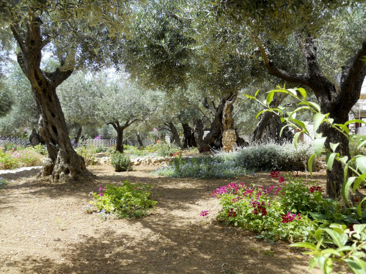 Your Divine Inspirations Garden of Gethsemane